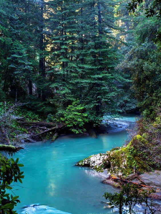Jedediah Smith creek.jpg