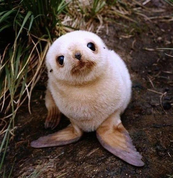 redwood sea lion.jpg