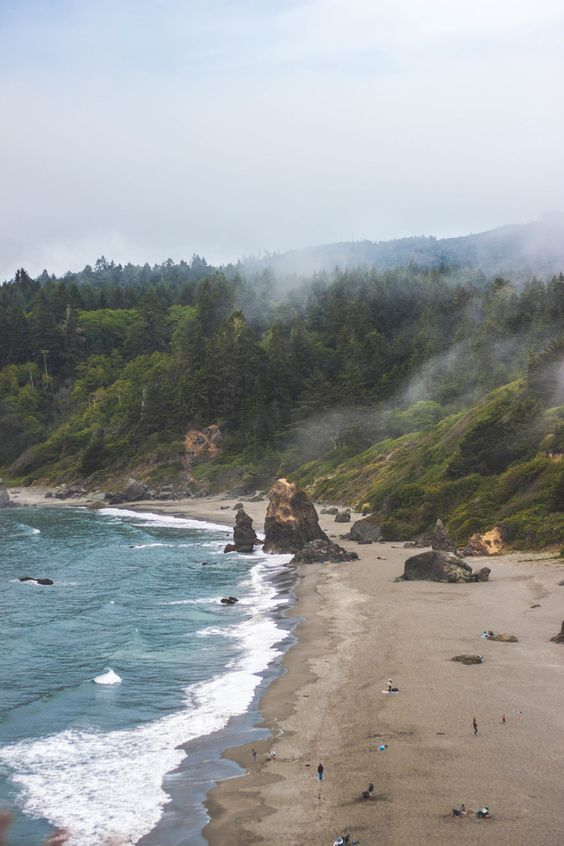 redwood trinidad.jpg