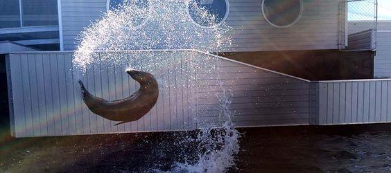 Ocean World Sea Lion.jpg