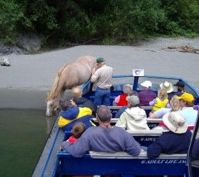 Klamath wild horse.jpg