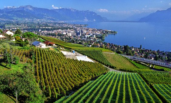 Montreux vineyards.jpg